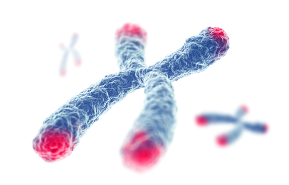 What is a Telomere? | Human Cellular Aging | TA-65 TA Sciences